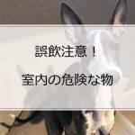 【誤飲注意】イタグレの室内飼育で気を付けるべき危険な物