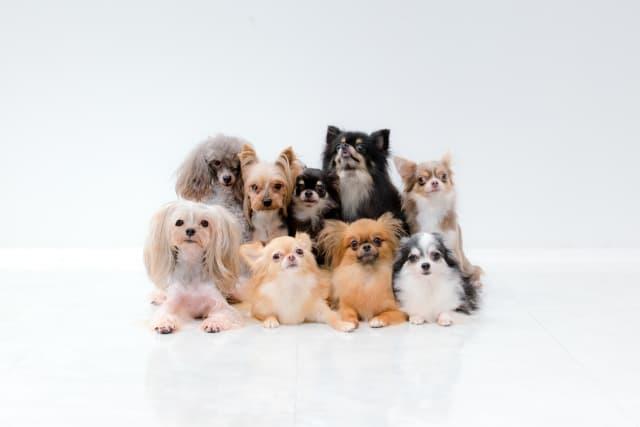 犬種別平均寿命