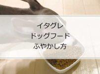生後4カ月頃までのイタグレの食事の与え方~ドッグフードをふやかす方法
