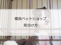 イタグレを飼うなら知っておきたい優良ペットショップの見分け方