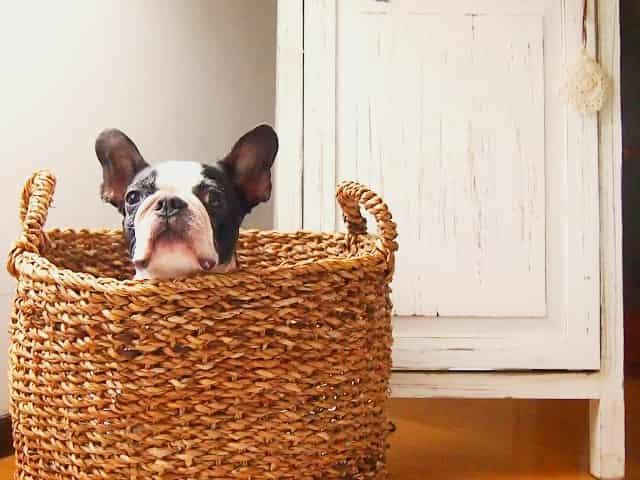 室内犬の方が寿命が長い理由