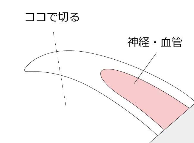イタグレの爪を切る部分