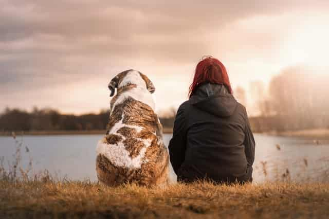 犬の寿命を人に換算すると?