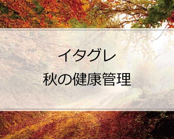 イタグレの秋の健康管理