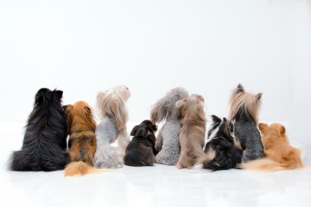 犬の毛の種類