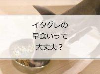 イタグレがドッグフードをガツガツ食べる!早食いって大丈夫?