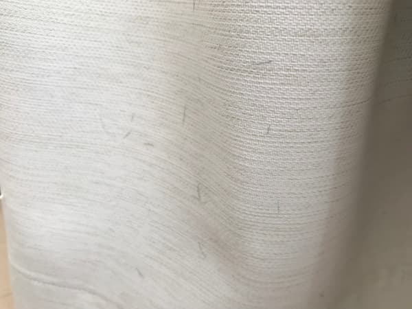 イタグレの抜け毛