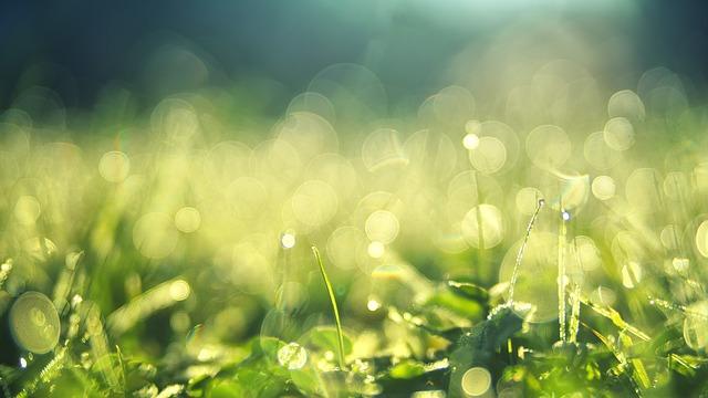 イタグレが草を食べさせたら辞めさせるべき?