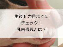 生後6カ月のイタグレの飼い主は要チェック!「乳歯遺残」とは?