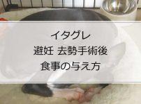 イタグレに避妊・去勢手術をした後の食事の与え方