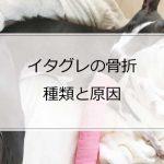骨折の種類とイタグレが骨折する主な原因