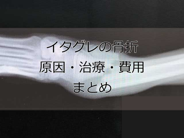 イタグレが骨折する原因と完治までの費用・期間まとめ