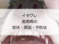イタグレが歯周病になる原因と予防法
