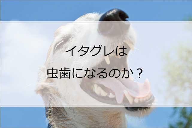 イタグレは虫歯になるのか?