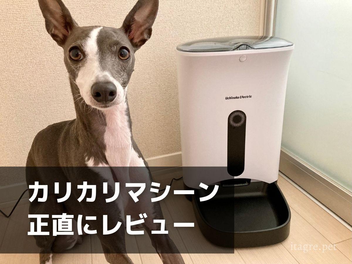【レビュー】自動給餌器「カリカリマシーン」を使ってみた